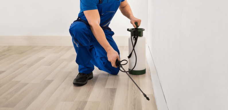 Contacting a Pest Management Firm is Immensely Essential