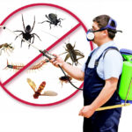Trap Mosquito Makes Your Life Free of Diseases!