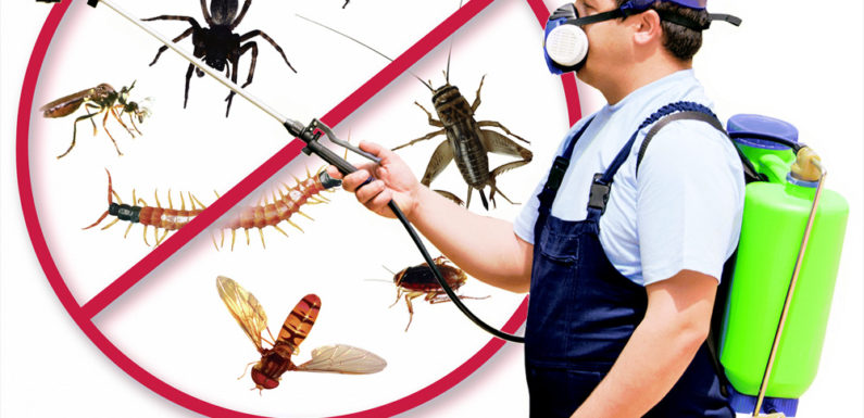 Lure Mosquito Makes Your Life Freed from Illnesses!