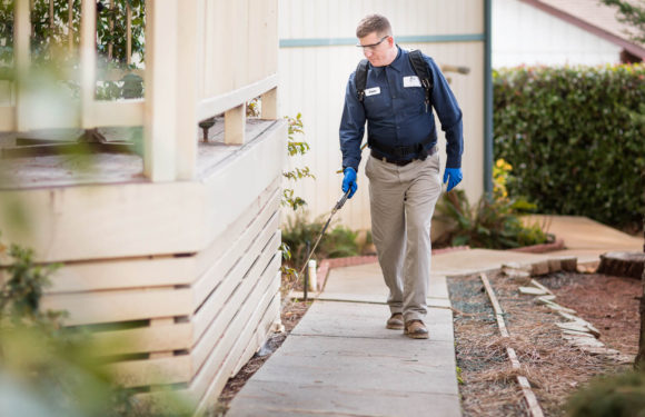 What Ought to You Know Earlier than Doing Pest Inspection?