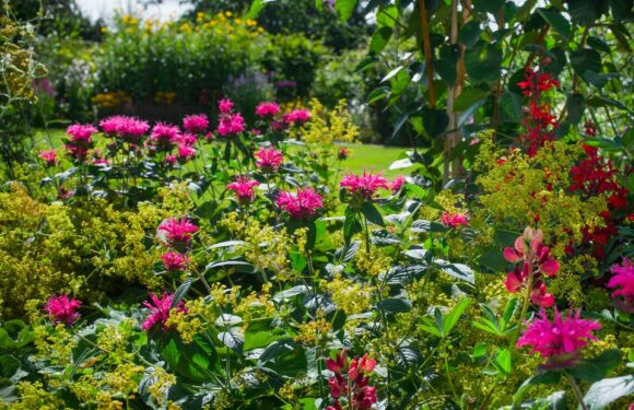 The Best Plants for Year-Round Growth