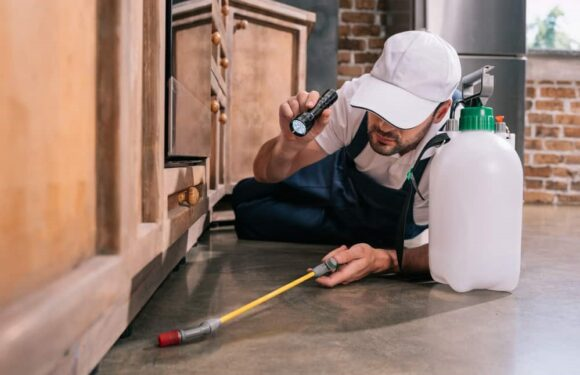 The Best and Efficient Pest Control Systems